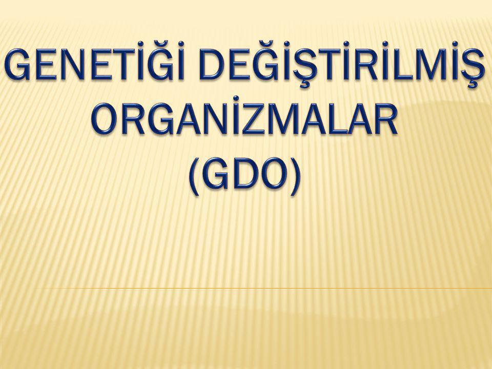 Bir canlının gen diziliminin değiştirilmesi ya da ona kendi doğasında bulunmayan bambaşka bir karakter kazandırılması yoluyla elde edilen canlı organizmalara Genetiği Değiştirilmiş Organizmalar , kısaca GDO adı verilir.