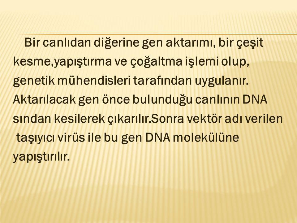 Bir canlıdan diğerine gen aktarımı, bir çeşit kesme,yapıştırma ve çoğaltma işlemi olup, genetik mühendisleri tarafından uygulanır. Aktarılacak gen önc