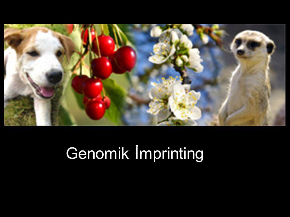 Genomik İmprinting
