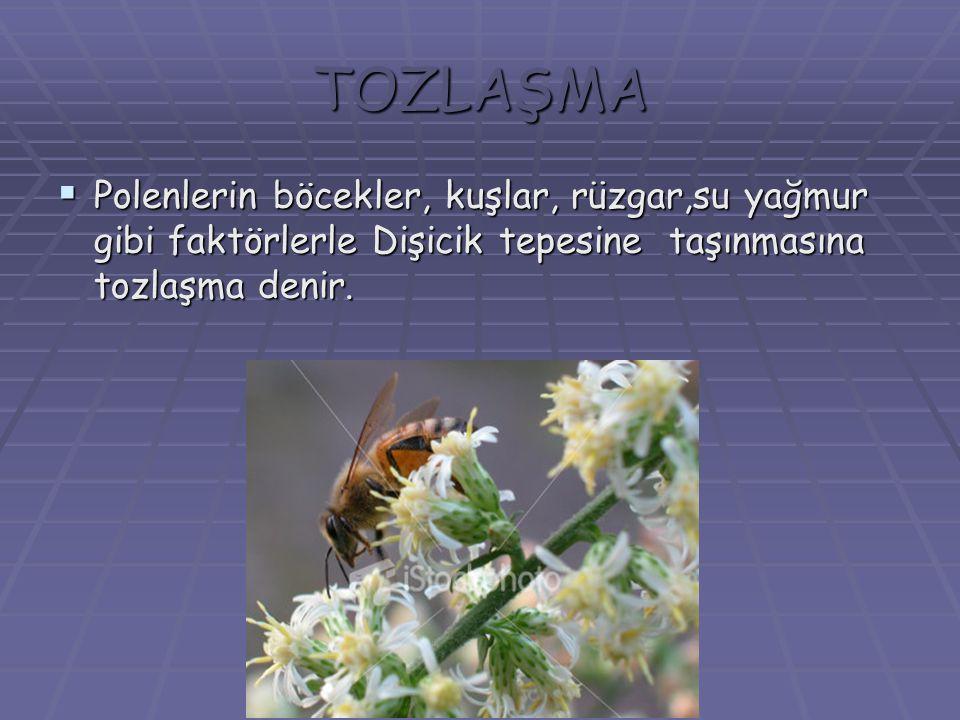 TOZLAŞMA  Polenlerin böcekler, kuşlar, rüzgar,su yağmur gibi faktörlerle Dişicik tepesine taşınmasına tozlaşma denir.