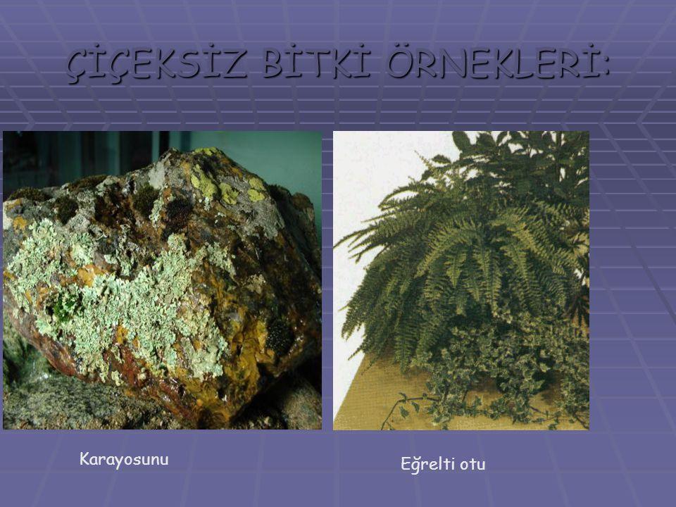MEYVE OLUŞUMU  Bazı bitkilerde tohumun dış kısmında etli sulu bir bölüm gelişir.