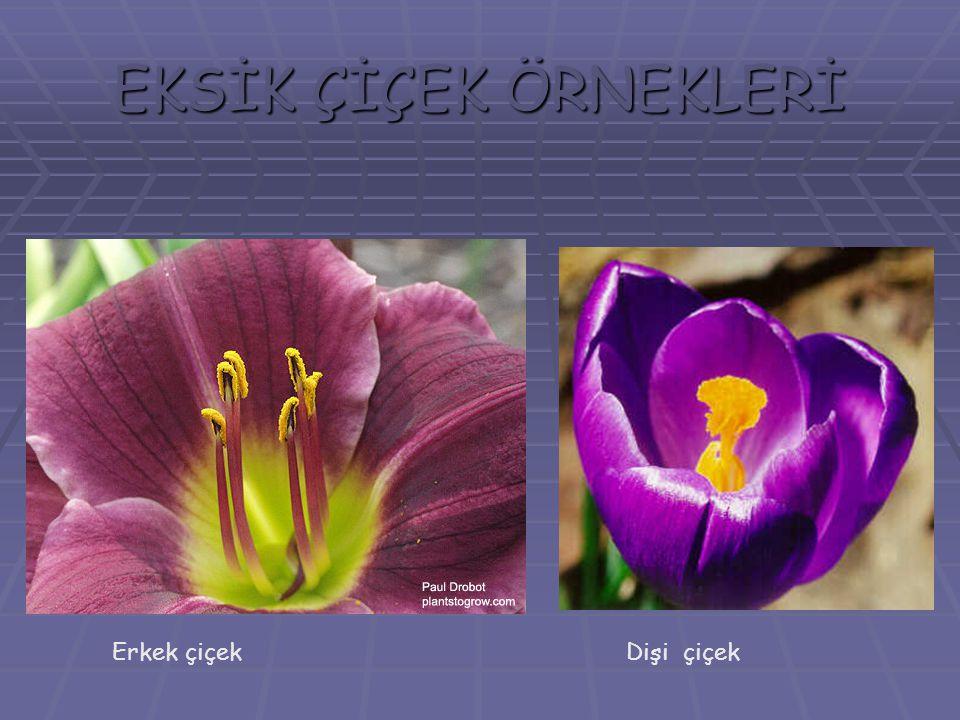 EKSİK ÇİÇEK ÖRNEKLERİ Erkek çiçekDişi çiçek