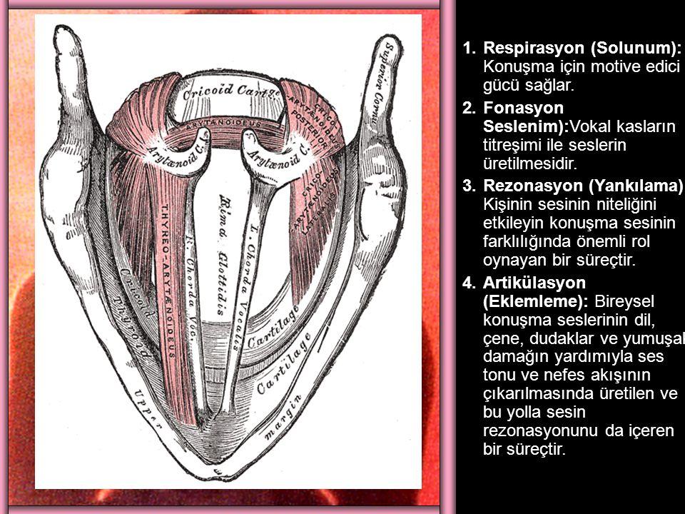 1.Respirasyon (Solunum): Konuşma için motive edici gücü sağlar. 2.Fonasyon Seslenim):Vokal kasların titreşimi ile seslerin üretilmesidir. 3.Rezonasyon