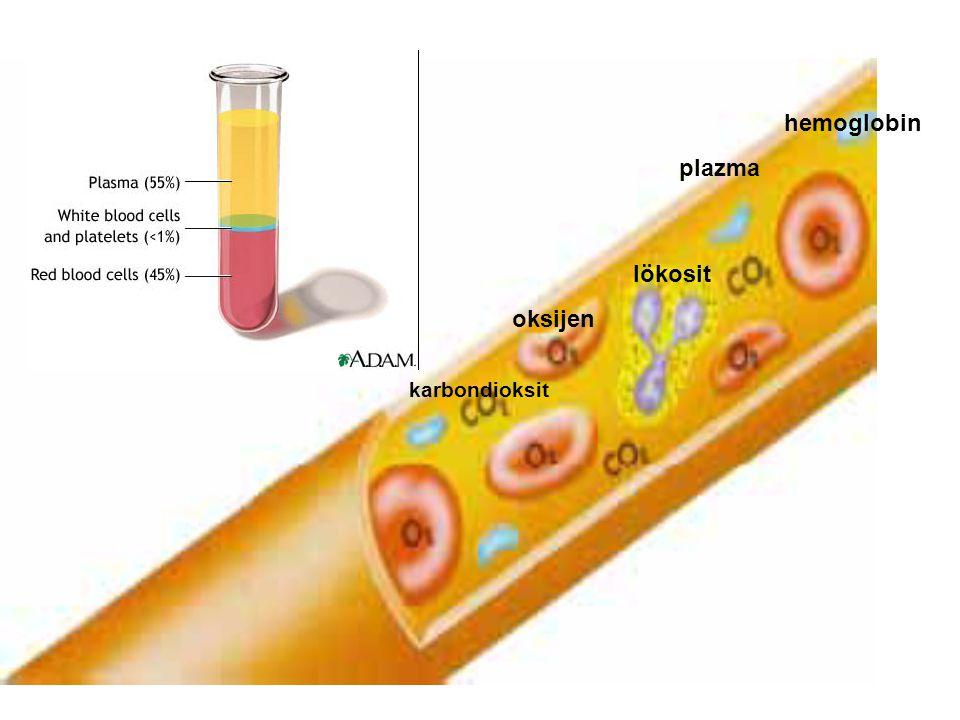 hemoglobin plazma lökosit oksijen karbondioksit