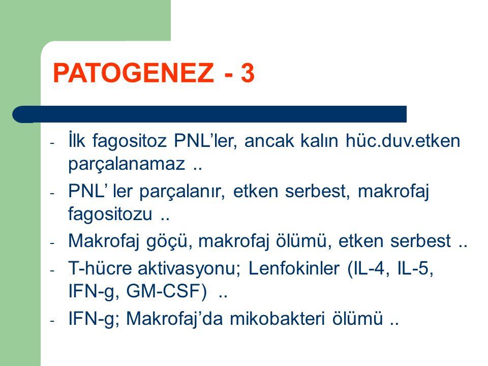 - İlk fagositoz PNL'ler, ancak kalın hüc.duv.etken parçalanamaz.. - PNL' ler parçalanır, etken serbest, makrofaj fagositozu.. - Makrofaj göçü, makrofa