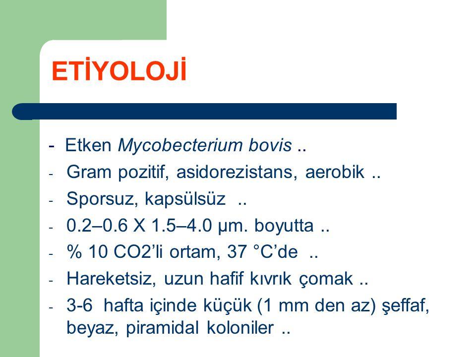 - Etken Mycobecterium bovis.. - Gram pozitif, asidorezistans, aerobik.. - Sporsuz, kapsülsüz.. - 0.2–0.6 X 1.5–4.0 µm. boyutta.. - % 10 CO2'li ortam,