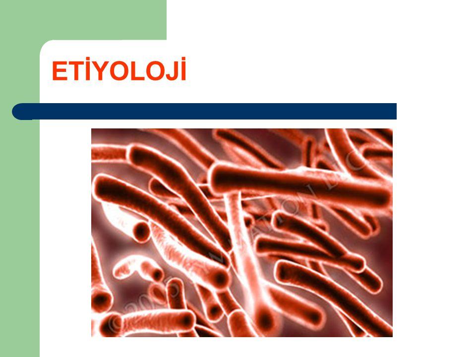 Mycobacterium_bovis_ Ziehl-Neelsen_stain ETİYOLOJİ