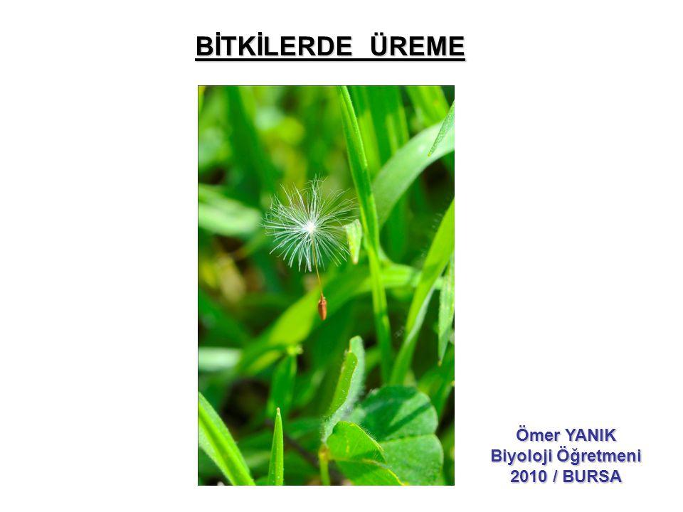 BİTKİLERDE ÜREME Ömer YANIK Biyoloji Öğretmeni 2010 / BURSA