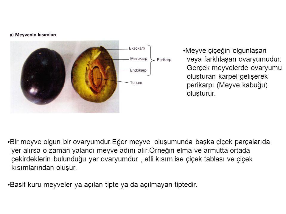 Meyve çiçeğin olgunlaşan veya farklılaşan ovaryumudur.