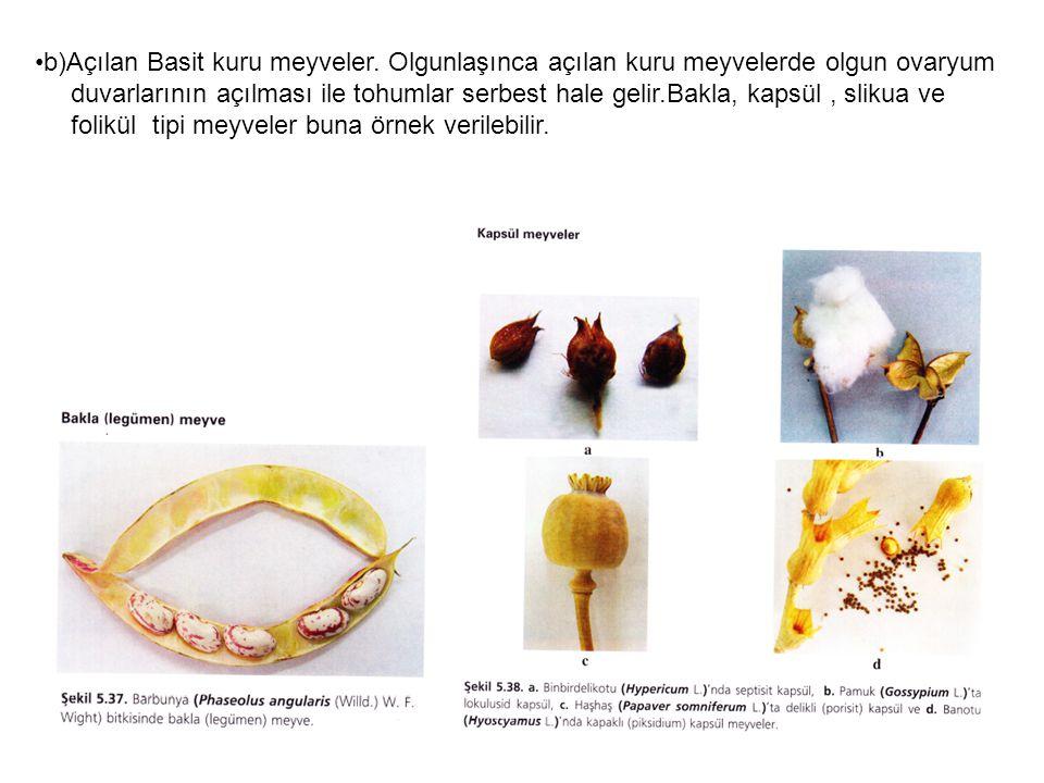 b)Açılan Basit kuru meyveler.
