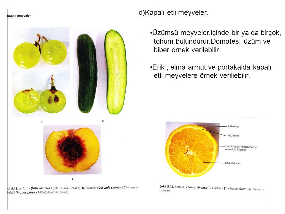 d)Kapalı etli meyveler.