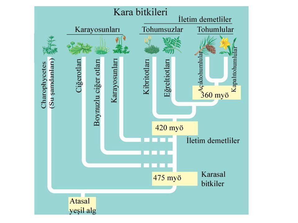 Karayosunları ekolojik ve ekonomik olarak pek çok yarar sağlar.
