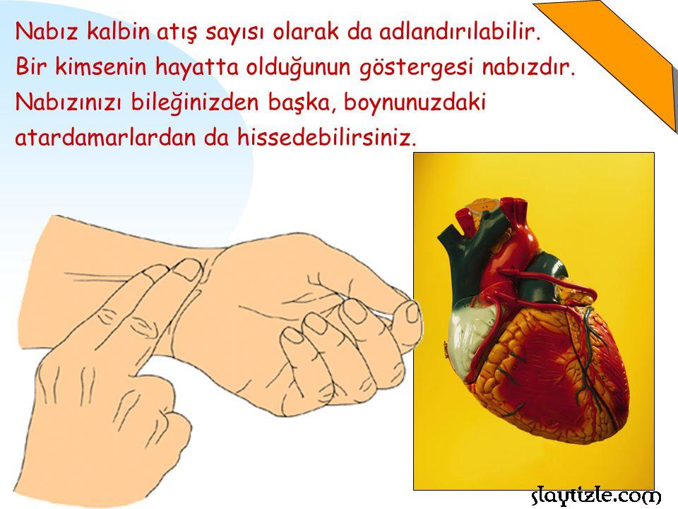 Nabız kalbin atış sayısı olarak da adlandırılabilir.