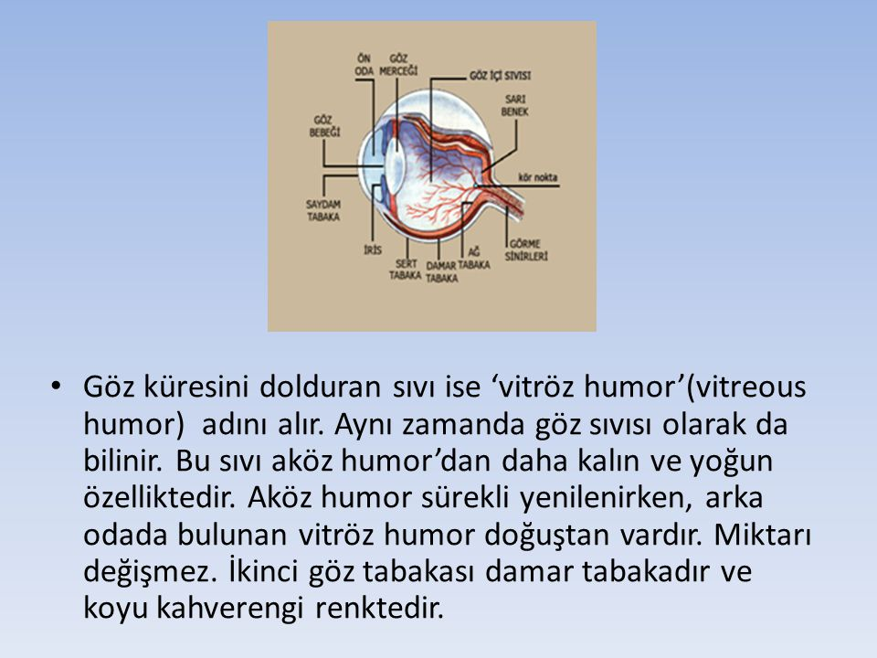 Göz küresini dolduran sıvı ise 'vitröz humor'(vitreous humor) adını alır. Aynı zamanda göz sıvısı olarak da bilinir. Bu sıvı aköz humor'dan daha kalın