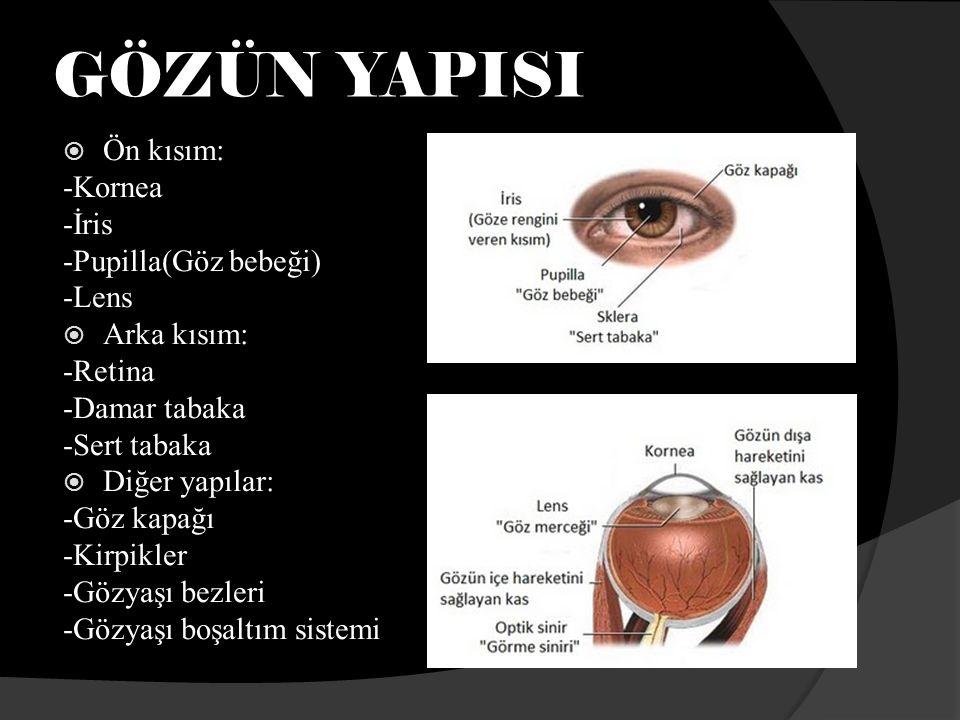 GÖZÜN YAPISI  Ön kısım: -Kornea -İris -Pupilla(Göz bebeği) -Lens  Arka kısım: -Retina -Damar tabaka -Sert tabaka  Diğer yapılar: -Göz kapağı -Kirpikler -Gözyaşı bezleri -Gözyaşı boşaltım sistemi
