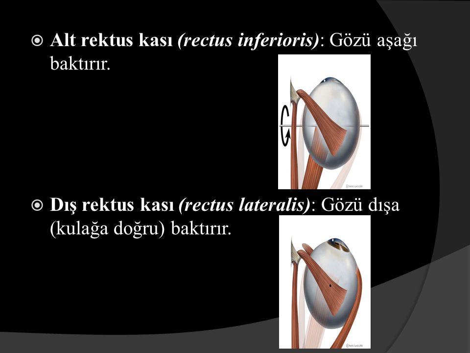 GÖZÜN HAREKET FİZYOLOJİSİ Göz pozisyonları dönme tarafından sınıflandırılabilir; (a).