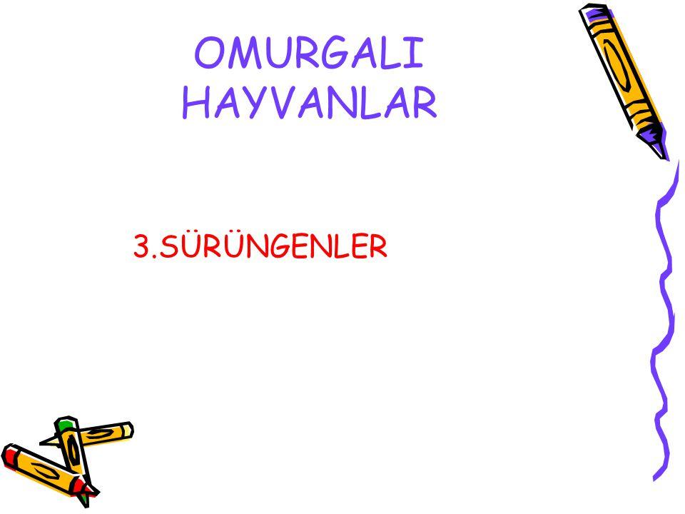OMURGALI HAYVANLAR 3.SÜRÜNGENLER