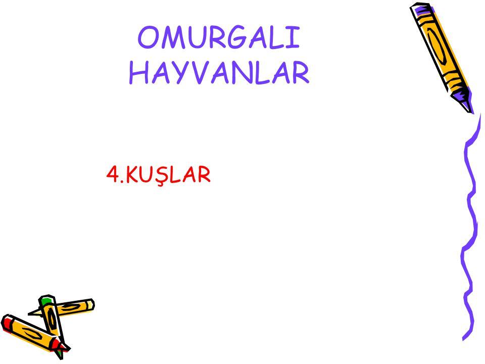 OMURGALI HAYVANLAR 4.KUŞLAR