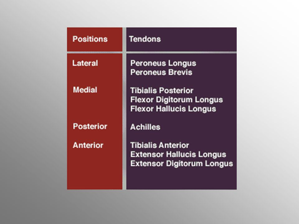 Lateral tendonlar