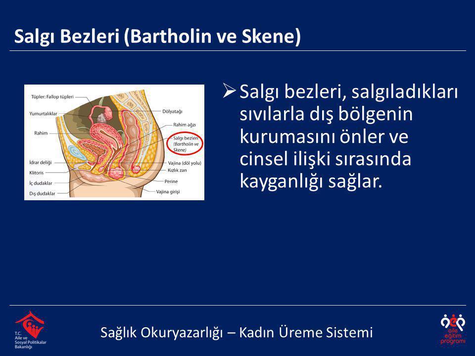 Salgı Bezleri (Bartholin ve Skene) Sağlık Okuryazarlığı – Kadın Üreme Sistemi  Salgı bezleri, salgıladıkları sıvılarla dış bölgenin kurumasını önler ve cinsel ilişki sırasında kayganlığı sağlar.