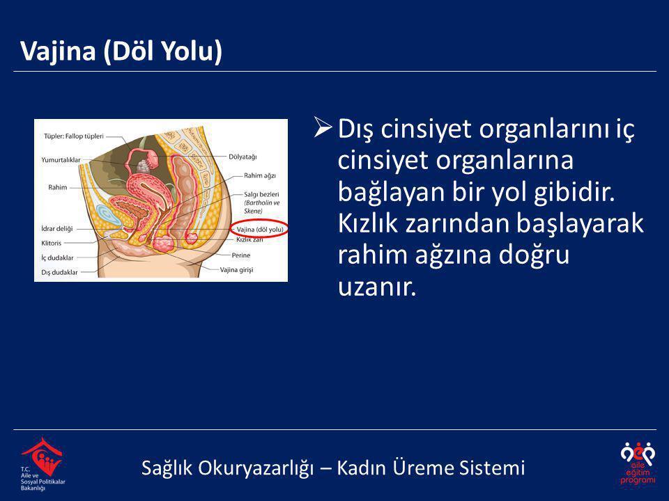 Vajina (Döl Yolu) Sağlık Okuryazarlığı – Kadın Üreme Sistemi  Dış cinsiyet organlarını iç cinsiyet organlarına bağlayan bir yol gibidir. Kızlık zarın