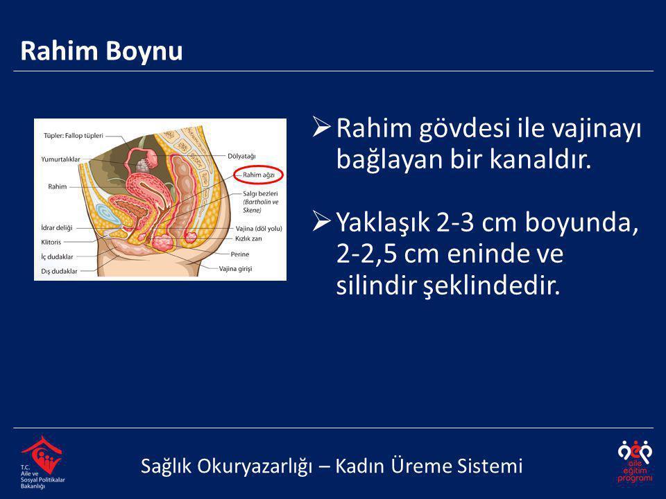 Rahim Boynu Sağlık Okuryazarlığı – Kadın Üreme Sistemi  Rahim gövdesi ile vajinayı bağlayan bir kanaldır.  Yaklaşık 2-3 cm boyunda, 2-2,5 cm eninde