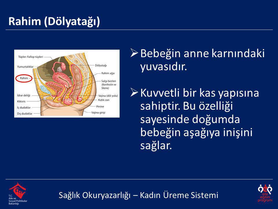 Rahim (Dölyatağı) Sağlık Okuryazarlığı – Kadın Üreme Sistemi  Bebeğin anne karnındaki yuvasıdır.  Kuvvetli bir kas yapısına sahiptir. Bu özelliği sa