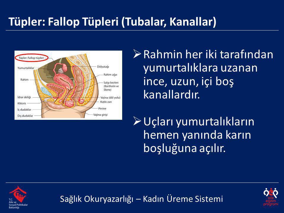 Tüpler: Fallop Tüpleri (Tubalar, Kanallar) Sağlık Okuryazarlığı – Kadın Üreme Sistemi  Rahmin her iki tarafından yumurtalıklara uzanan ince, uzun, içi boş kanallardır.