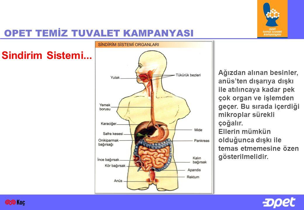 OPET TEMİZ TUVALET KAMPANYASI Sindirim Sistemi... Ağızdan alınan besinler, anüs'ten dışarıya dışkı ile atılıncaya kadar pek çok organ ve işlemden geçe