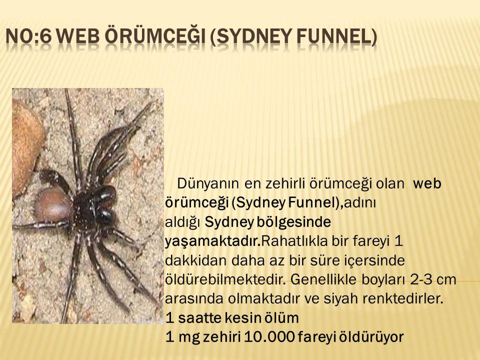 Dünyanın en zehirli örümceği olan web örümceği (Sydney Funnel),adını aldığı Sydney bölgesinde yaşamaktadır.Rahatlıkla bir fareyi 1 dakkidan daha az bi