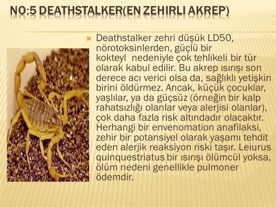  Deathstalker zehri düşük LD50, nörotoksinlerden, güçlü bir kokteyl nedeniyle çok tehlikeli bir tür olarak kabul edilir. Bu akrep ısırışı son derece