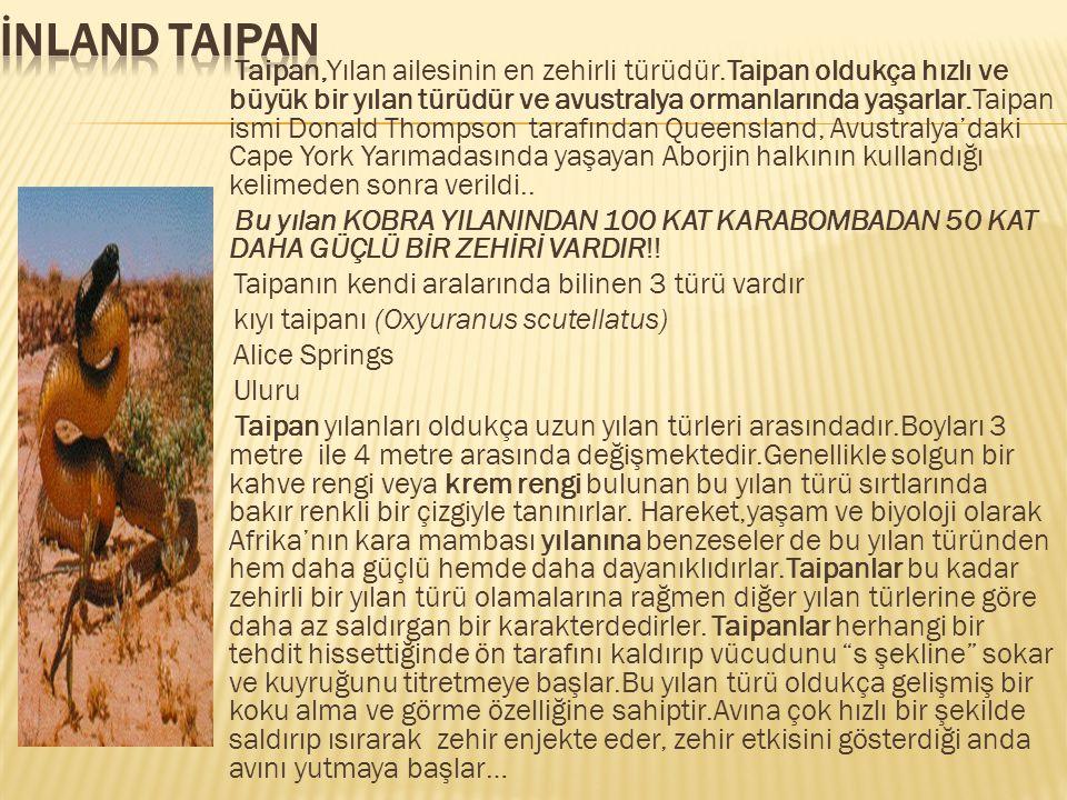 Taipan,Yılan ailesinin en zehirli türüdür.Taipan oldukça hızlı ve büyük bir yılan türüdür ve avustralya ormanlarında yaşarlar.Taipan ismi Donald Thomp