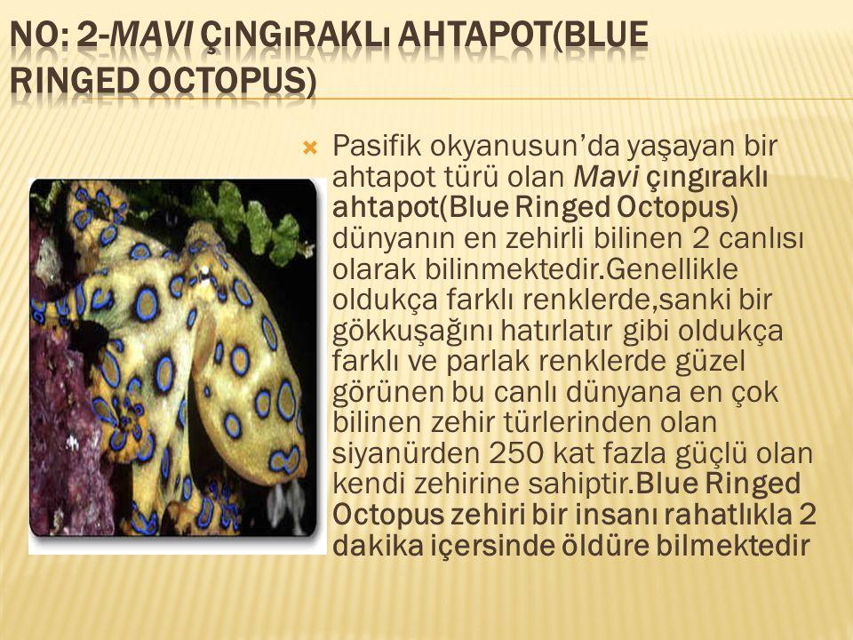  Pasifik okyanusun'da yaşayan bir ahtapot türü olan Mavi çıngıraklı ahtapot(Blue Ringed Octopus) dünyanın en zehirli bilinen 2 canlısı olarak bilinme
