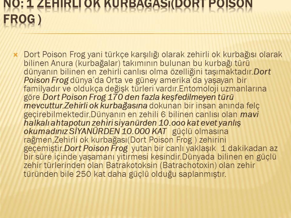  Dort Poison Frog yani türkçe karşılığı olarak zehirli ok kurbağısı olarak bilinen Anura (kurbağalar) takımının bulunan bu kurbağı türü dünyanın bili