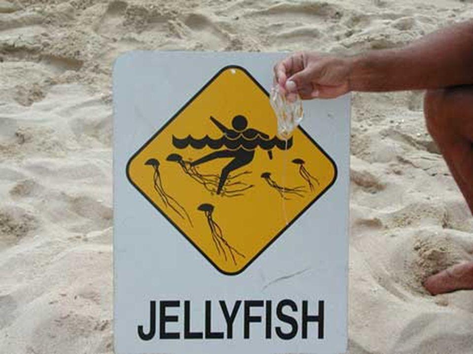 Box jelly fısh - En zehirli canlı türlerindedir. - Ölüm sadece 3dk içerisinde gelir. - Dokungaçlarının boyu 3m'yi bula bilir. - Hint pasifiginde yaşar