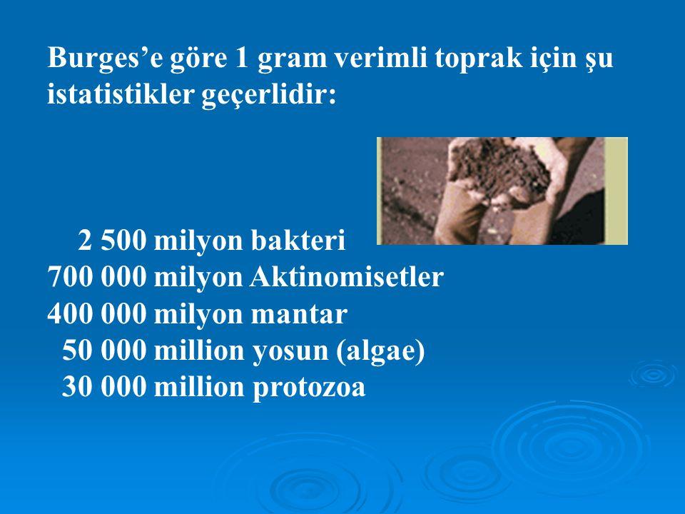 Burges'e göre 1 gram verimli toprak için şu istatistikler geçerlidir: 2 500 milyon bakteri 700 000 milyon Aktinomisetler 400 000 milyon mantar 50 000 million yosun (algae) 30 000 million protozoa
