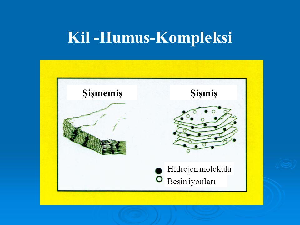 Kil -Humus-Kompleksi ŞişmemişŞişmiş Hidrojen molekülü Besin iyonları