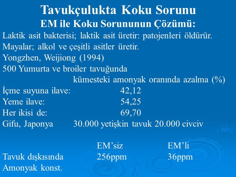 Tavukçulukta Koku Sorunu EM ile Koku Sorununun Çözümü: Laktik asit bakterisi; laktik asit üretir: patojenleri öldürür. Mayalar; alkol ve çeşitli asitl