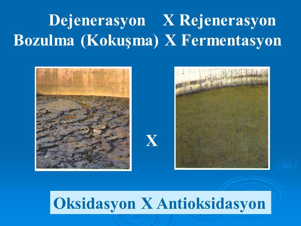 Dejenerasyon X Rejenerasyon Bozulma (Kokuşma) X Fermentasyon X Oksidasyon X Antioksidasyon