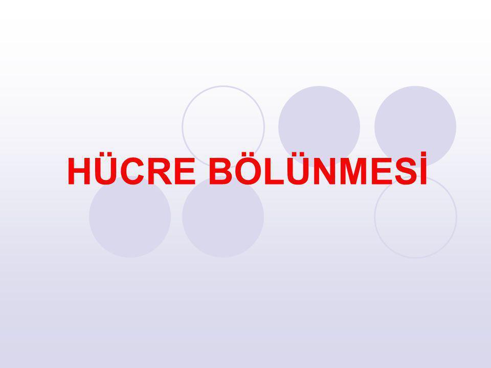 HÜCRE BÖLÜNMESİ