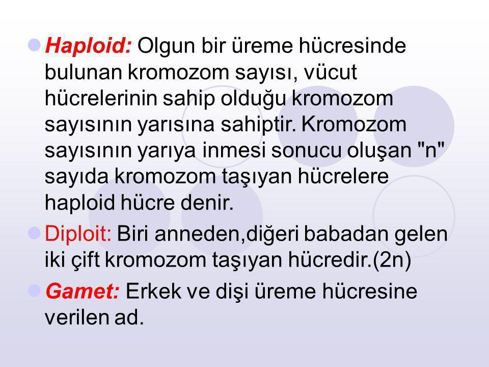 Haploid: Olgun bir üreme hücresinde bulunan kromozom sayısı, vücut hücrelerinin sahip olduğu kromozom sayısının yarısına sahiptir. Kromozom sayısının