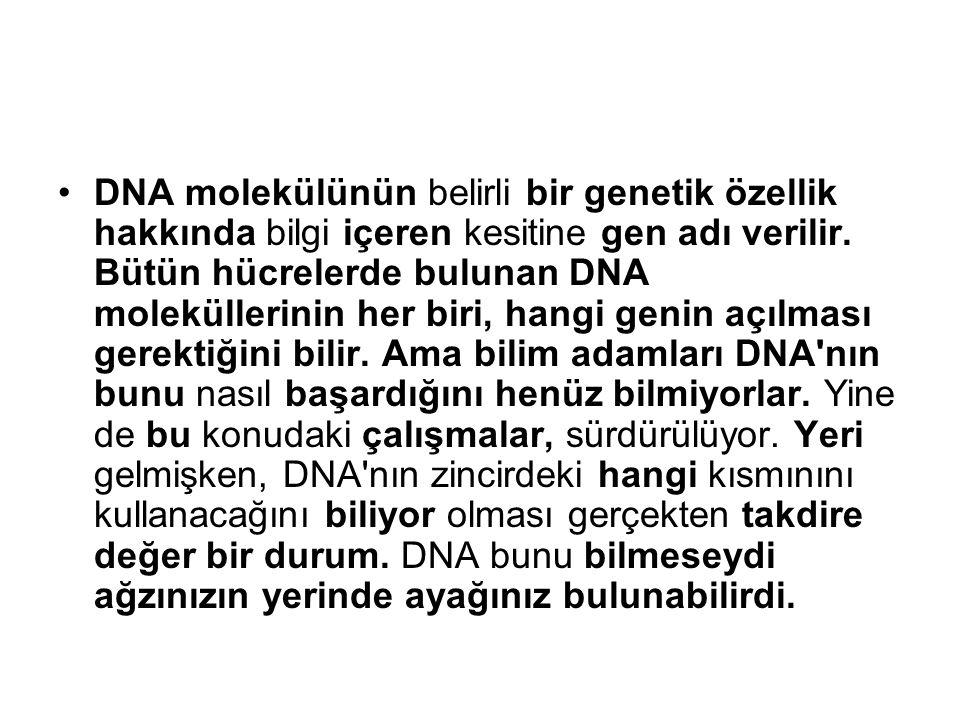 DNA bütün canlıların hücre çekirdeklerinde bulunur.
