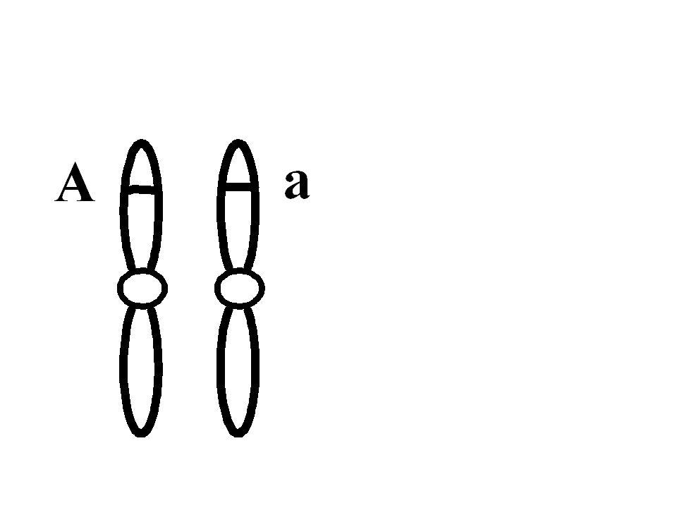 Dna nın belirli bir genetik özellik hakkında bilgi içeren kesitine kısmına gen denir.