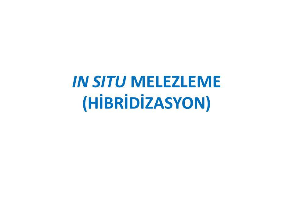 IN SITU MELEZLEME (HİBRİDİZASYON)