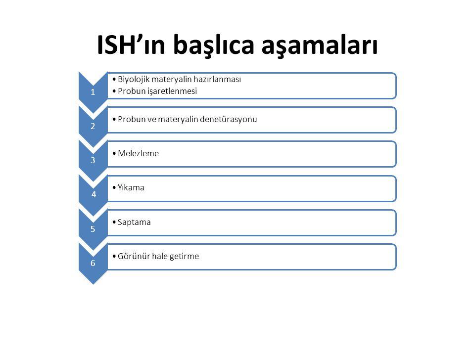 ISH'ın başlıca aşamaları 1 Biyolojik materyalin hazırlanması Probun işaretlenmesi 2 Probun ve materyalin denetürasyonu 3 Melezleme 4 Yıkama 5 Saptama