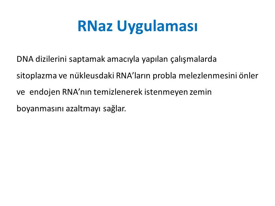 RNaz Uygulaması DNA dizilerini saptamak amacıyla yapılan çalışmalarda sitoplazma ve nükleusdaki RNA'ların probla melezlenmesini önler ve endojen R