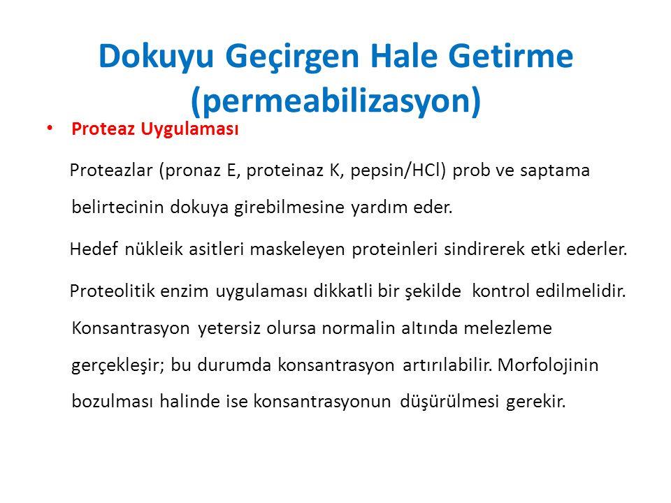 Dokuyu Geçirgen Hale Getirme (permeabilizasyon) Proteaz Uygulaması Proteazlar (pronaz E, proteinaz K, pepsin/HCl) prob ve saptama belirtecinin dokuya