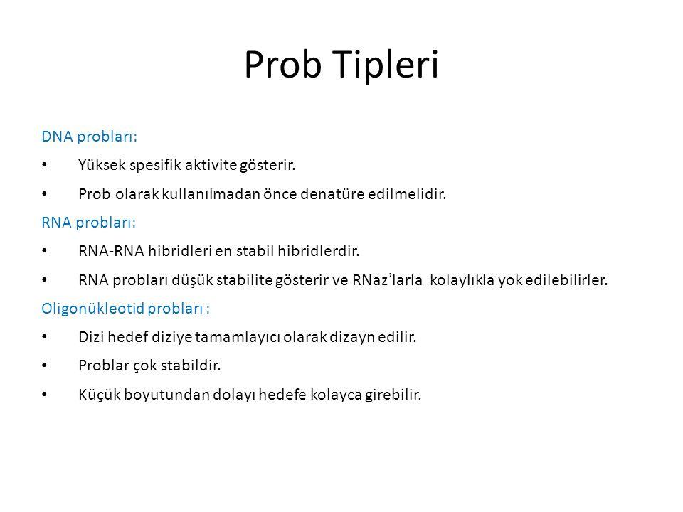 Prob Tipleri DNA probları: Yüksek spesifik aktivite gösterir. Prob olarak kullanılmadan önce denatüre edilmelidir. RNA probları: RNA-RNA hibridleri en