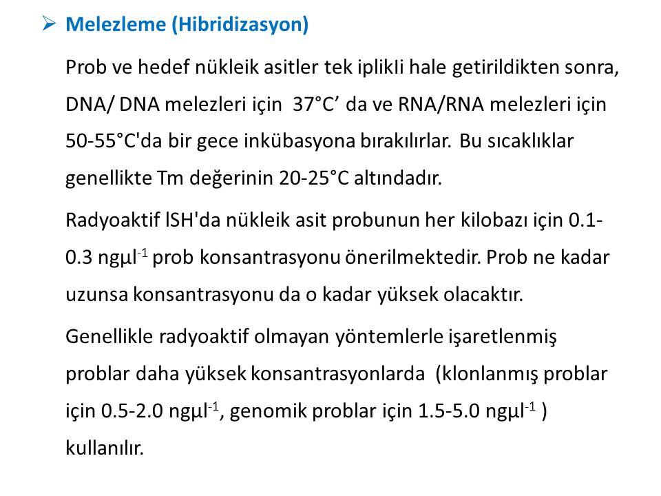  Melezleme (Hibridizasyon) Prob ve hedef nükleik asitler tek iplikIi hale getirildikten sonra, DNA/ DNA melezleri için 37°C' da ve RNA/RNA melezleri
