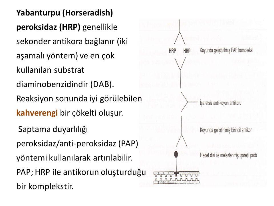 Yabanturpu (Horseradish) peroksidaz (HRP) genellikle sekonder antikora bağlanır (iki aşamalı yöntem) ve en çok kullanılan substrat diaminobenzidindir